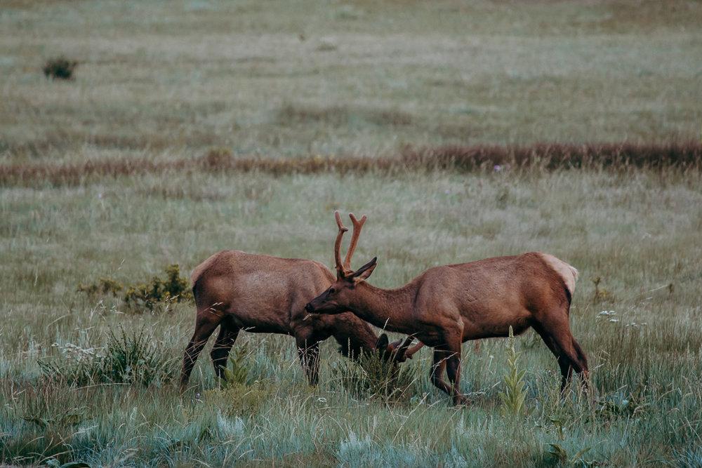 Rocky Mountain National Park Elopement_20170731_0077.jpg
