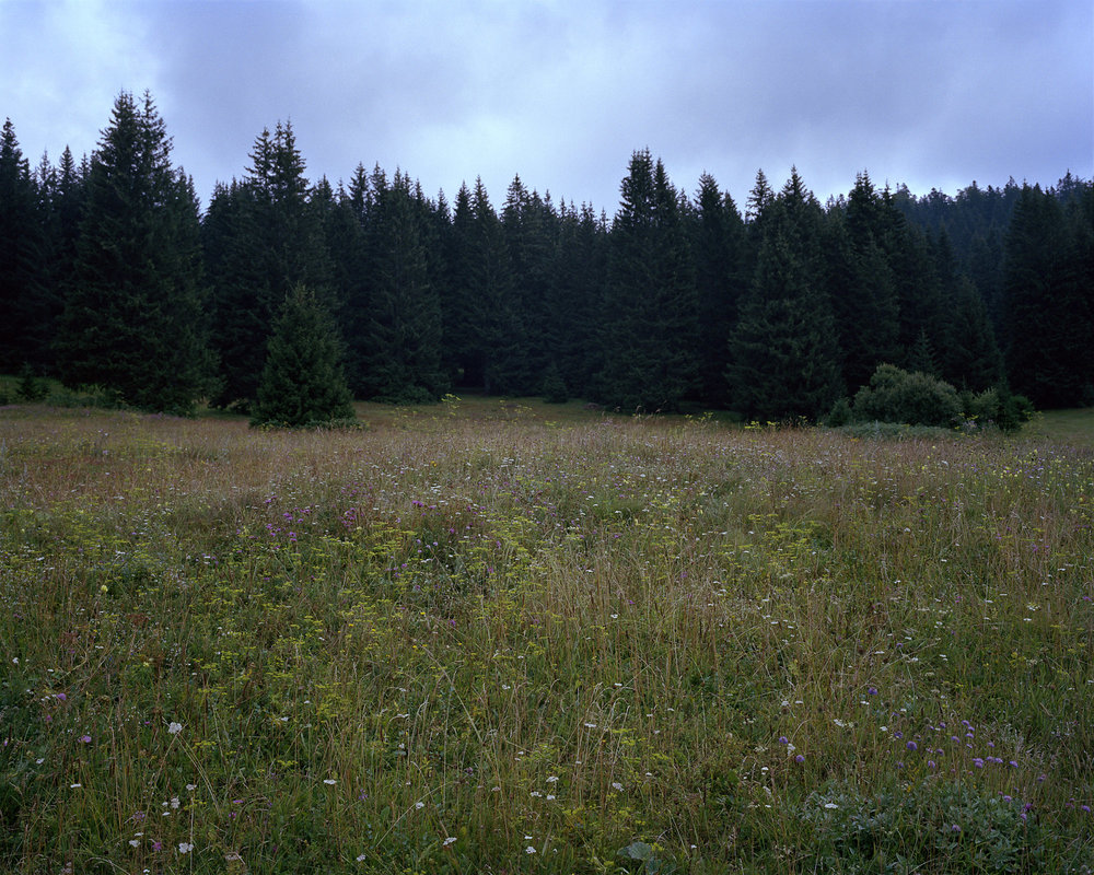 04 Meadow_Ozren.jpg