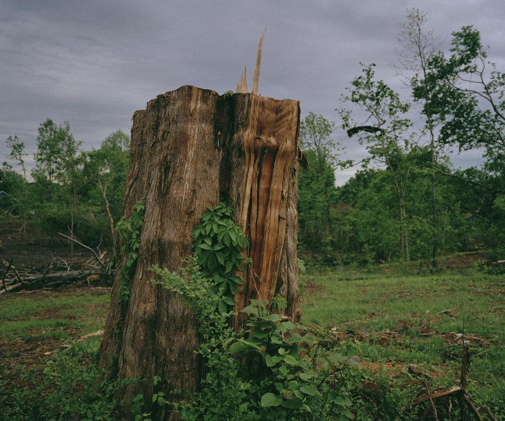 Cedar_trunk.jpg