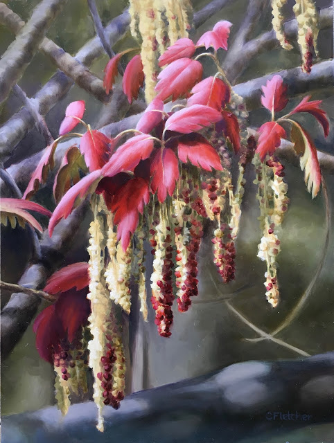 Oak Catkins -   Volcan Mountain   12x16 - oil on panel