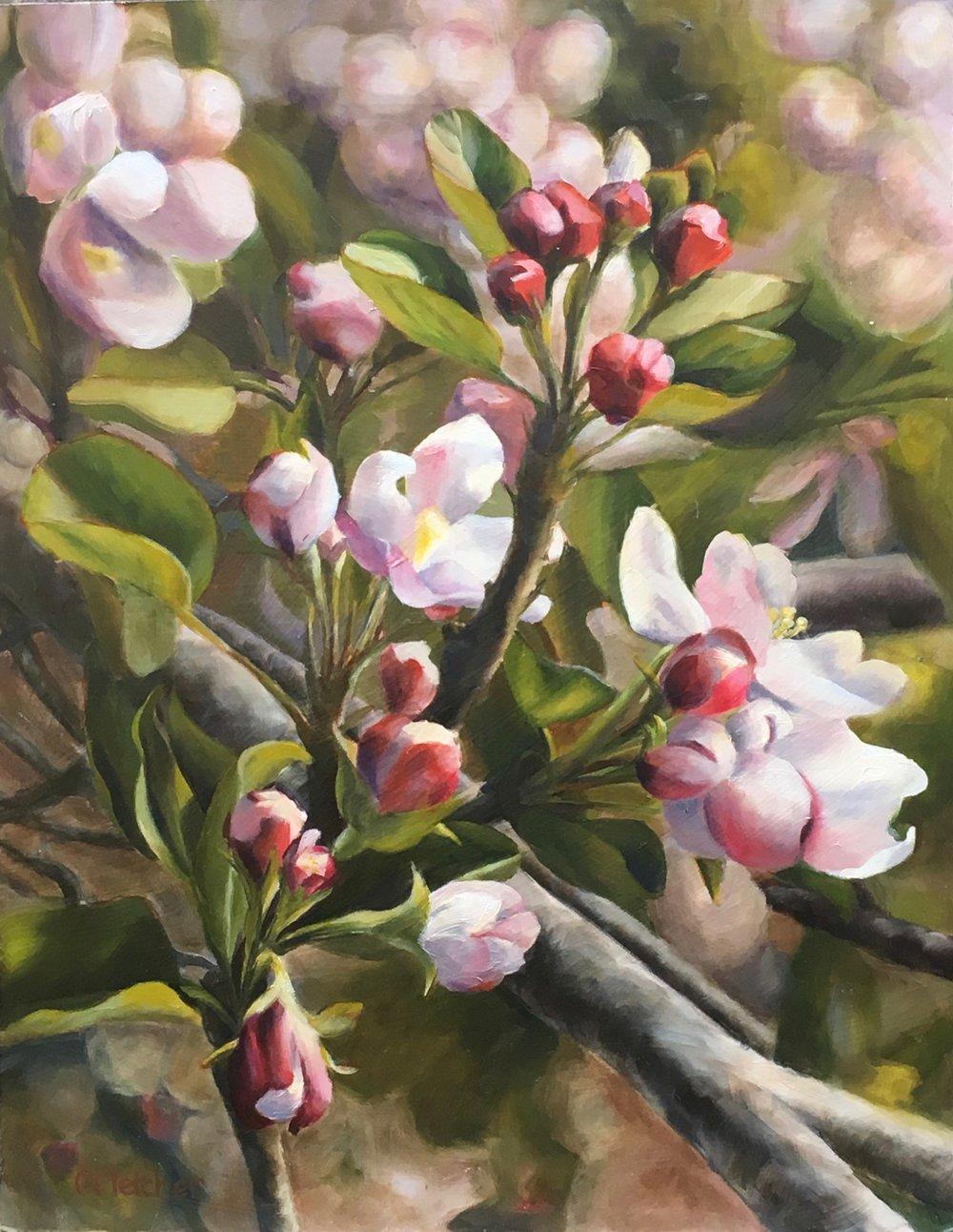 Spring in Julian  - 11x14 - Oil on panel
