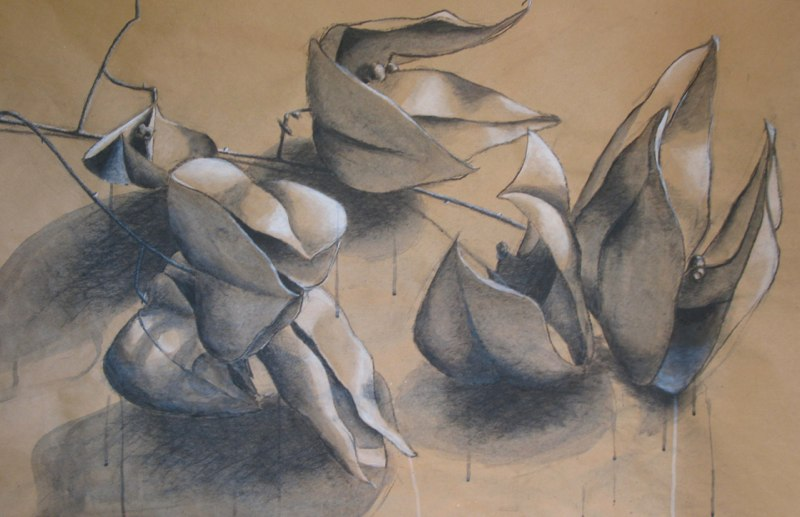 Seed Pods - 48x72 - ink, charcoal and chalk on paper