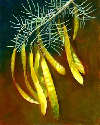 Indian Wells SeedPods  - 8x10 - Oil on Panel - $385.00