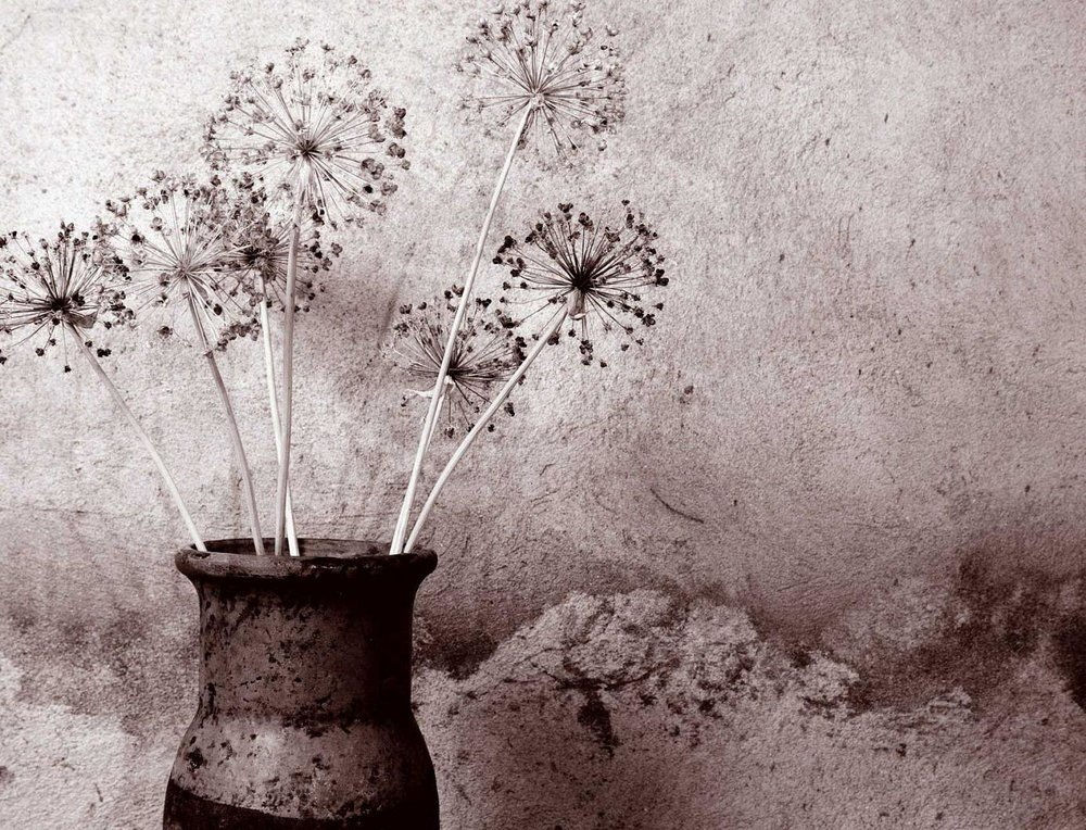 candidates_sepia_flowers.jpg
