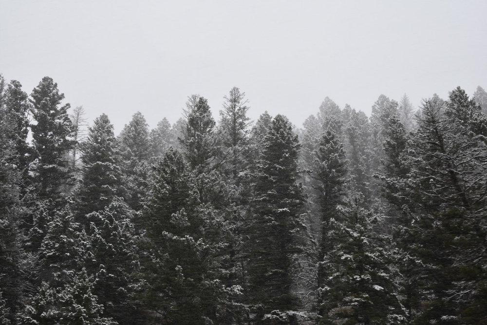 Montana GORGEOUS