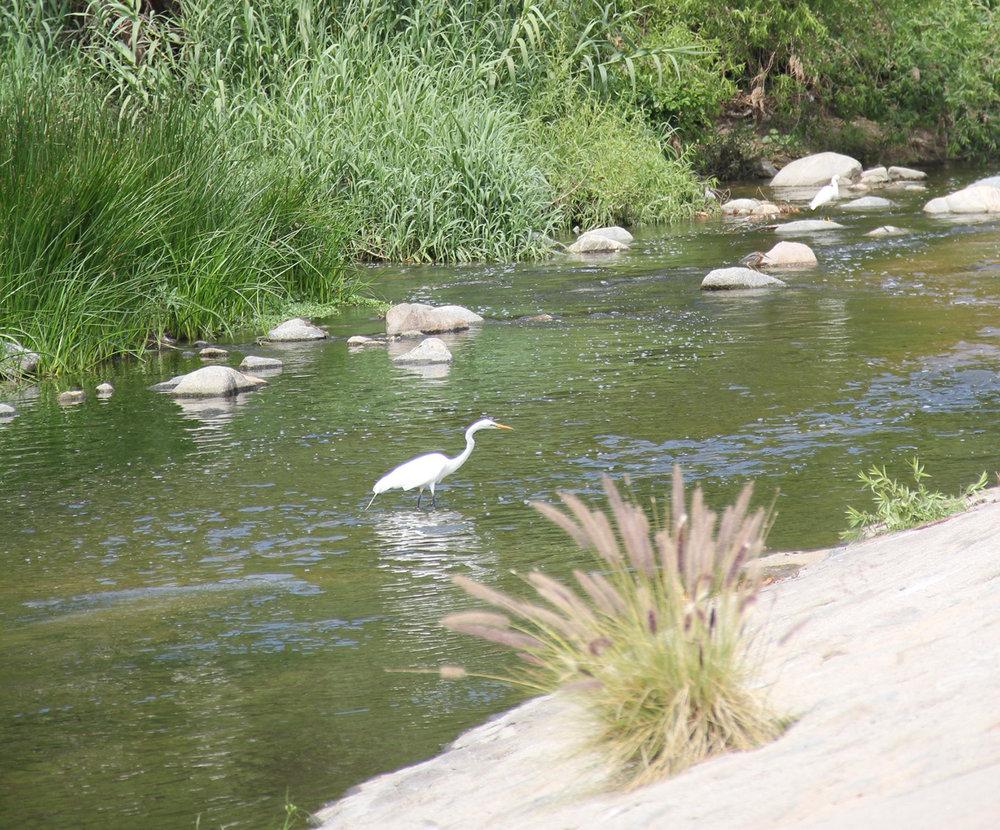 Glendale-Narrows_3.jpg