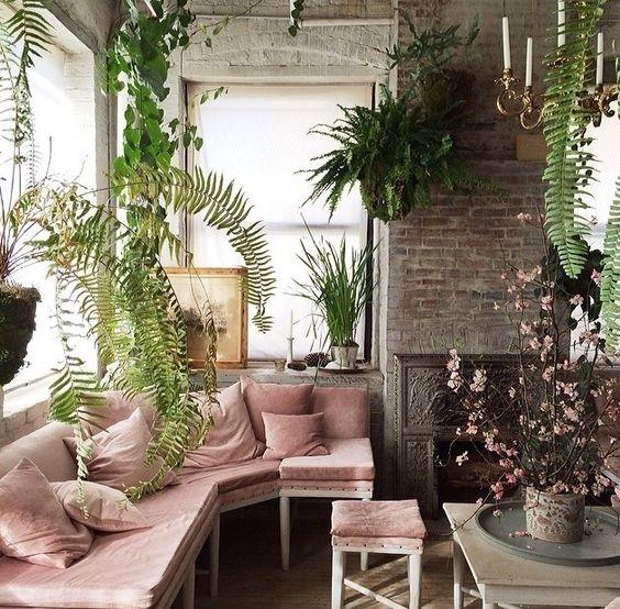 Plants on Pink