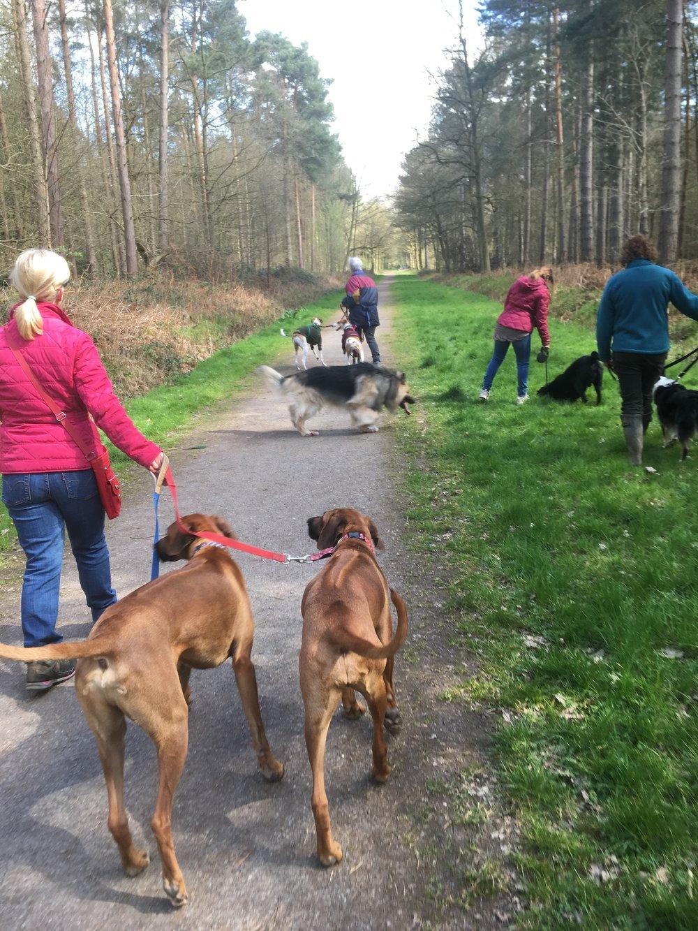 taken on a recent group dog behaviour walk