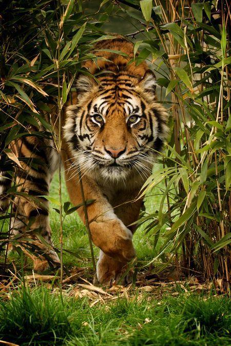 a98f7338e4cc1718c8536b1cf9b9c134--nat-geo-photography-wildlife-photography-national-geographic.jpg