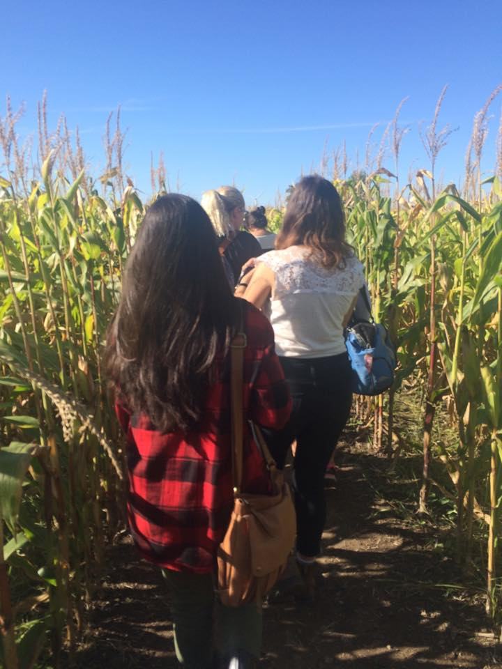 Inside the Annual Wolfe Island Corn Maze