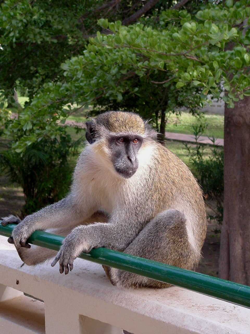 VIsitor on my hotel railing in the Gambia.