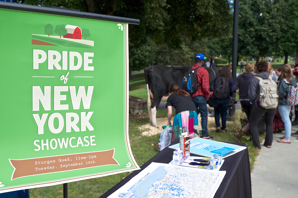 Campus Auxiliary Services holds a Pride of New York Showcase on campus every fall in order to promote the purchase of locally grown food. Pictured right is a cow that was brought to the event from an Upstate Cooperative farm. This event is part of CAS's initiative to continue to improve its sustainability practices and local outreach. (Lamron Archives/Courtesy of CAS)