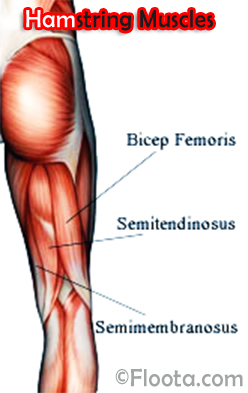 What are the best exercises to develop robust hamstrings and reduce ...