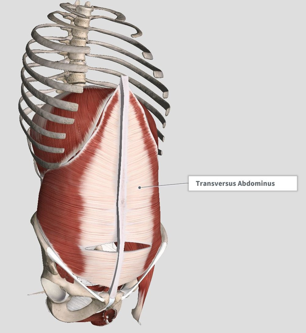 Introduction & Anatomy — The Gap Physio