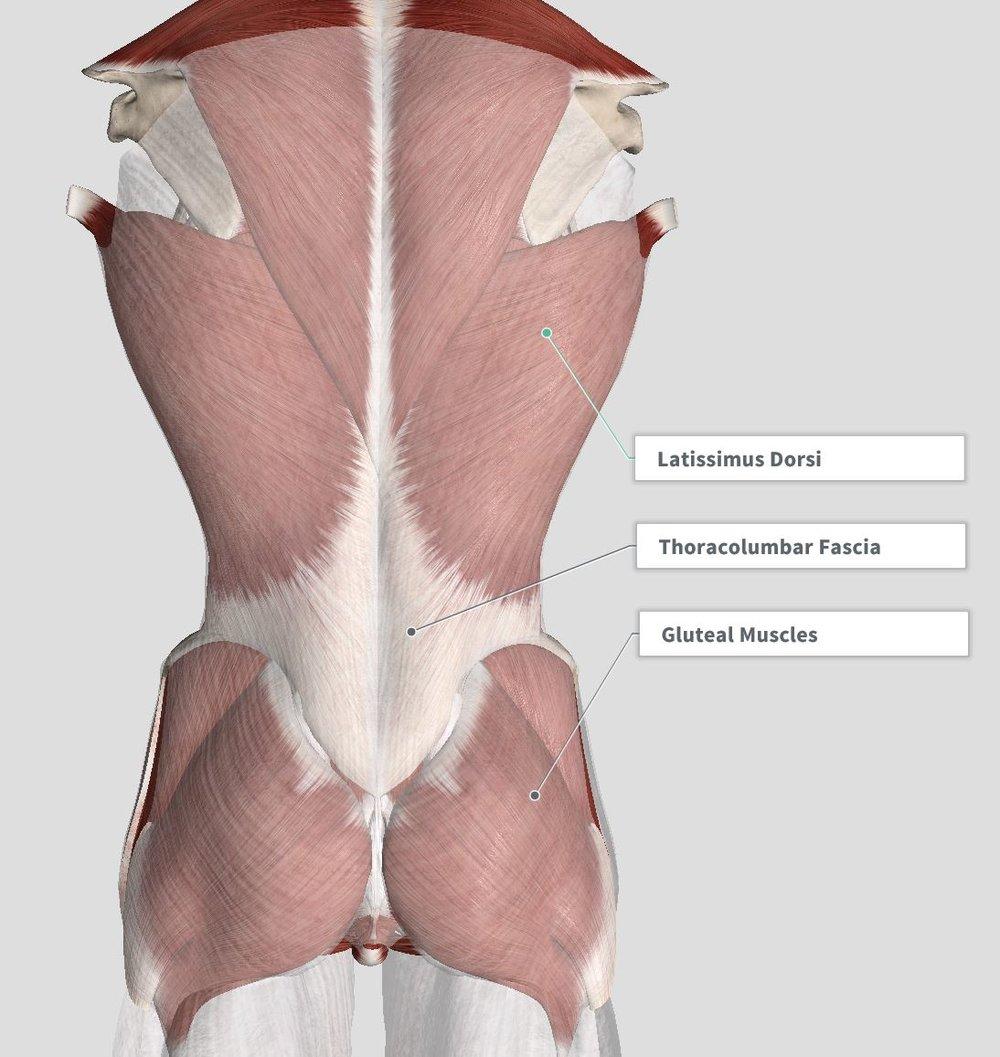 Introduction Anatomy The Gap Physio
