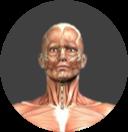 Cervical Spine Image.png