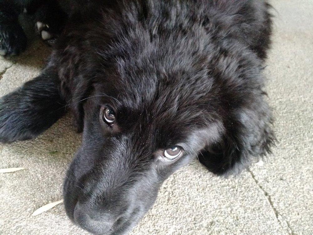 Those eyes!!! ;-)