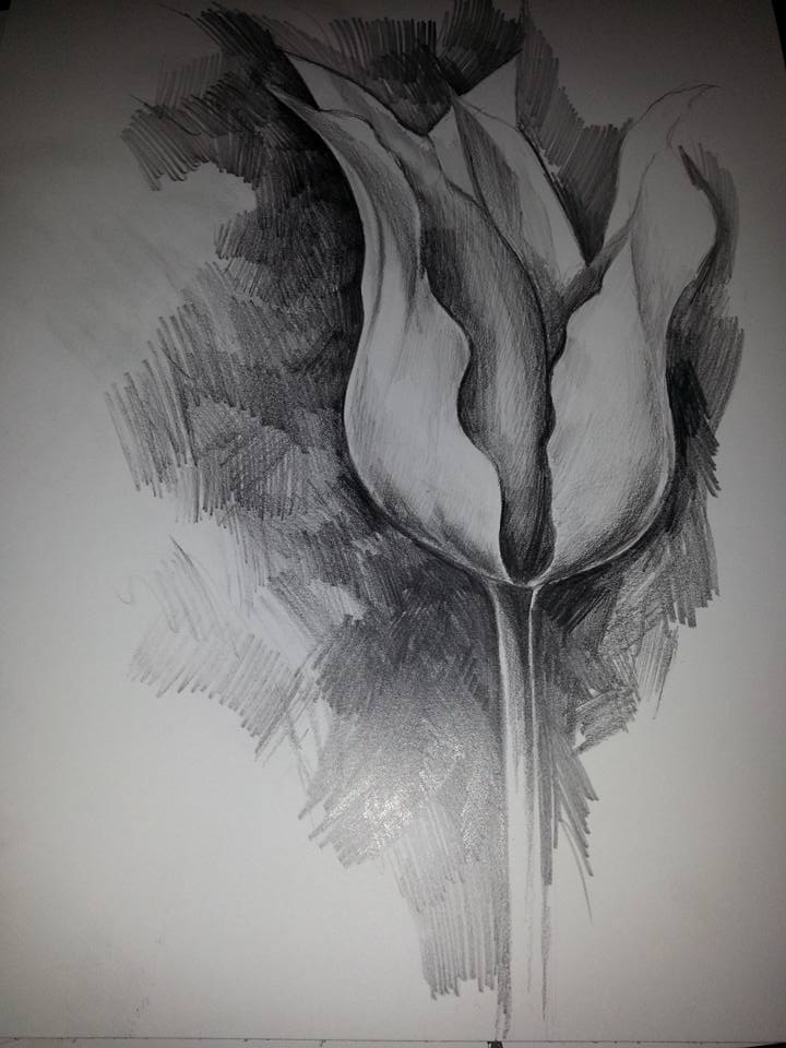 Tulip study, pencil on paper