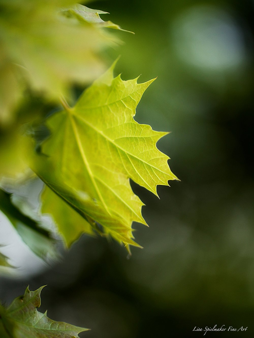 Green leaf 2016.jpg