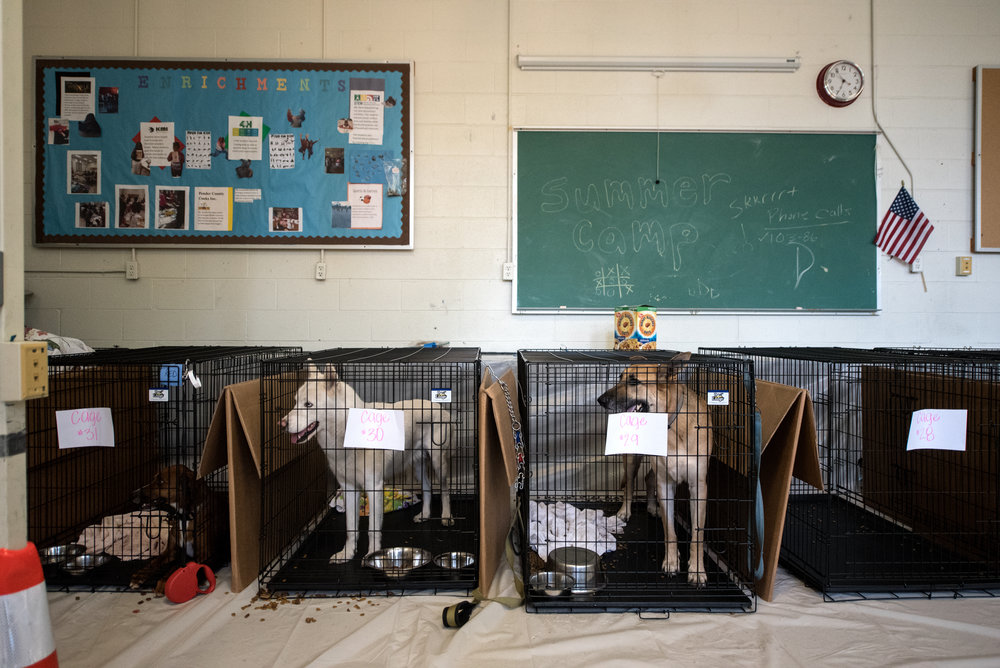 Pets are evacuated ahead of the forecasted landfall of Hurricane Florence and seek shelter at Burgaw Middle School in Burgaw, North Carolina, USA, 12 September 2018.