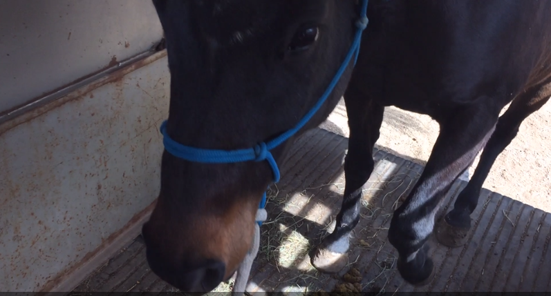 Blog medicine horse program im an impatient person and i always have been this is one of the reasons that horses are so good for me because in order to achieve anything sustainable publicscrutiny Gallery