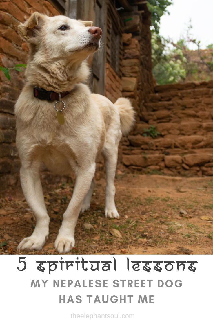 5 Spiritual Lessons my Nepalese Street Dog Has Taught Me - The Elephant Soul Blog.png