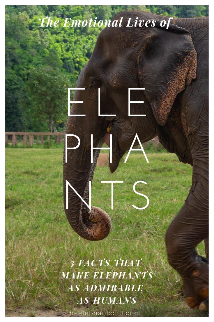 The Emotional Lives of Elephants - The Elephant Soul Blog.png