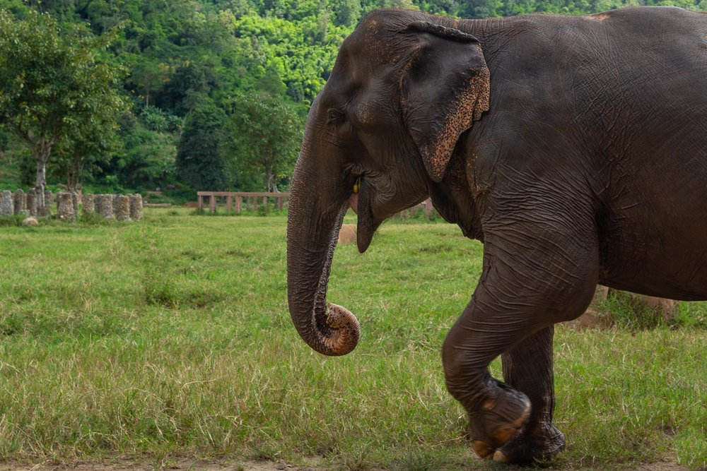 "If you travel to any Asian countries, please keep in mind that elephants that work for tourists are subject of  systematic inhumane treatment . Their welfare and wellbeing depends a great deal on the demand for their ""services"". Let's be their champions and end that demand. Please refrain from riding them."