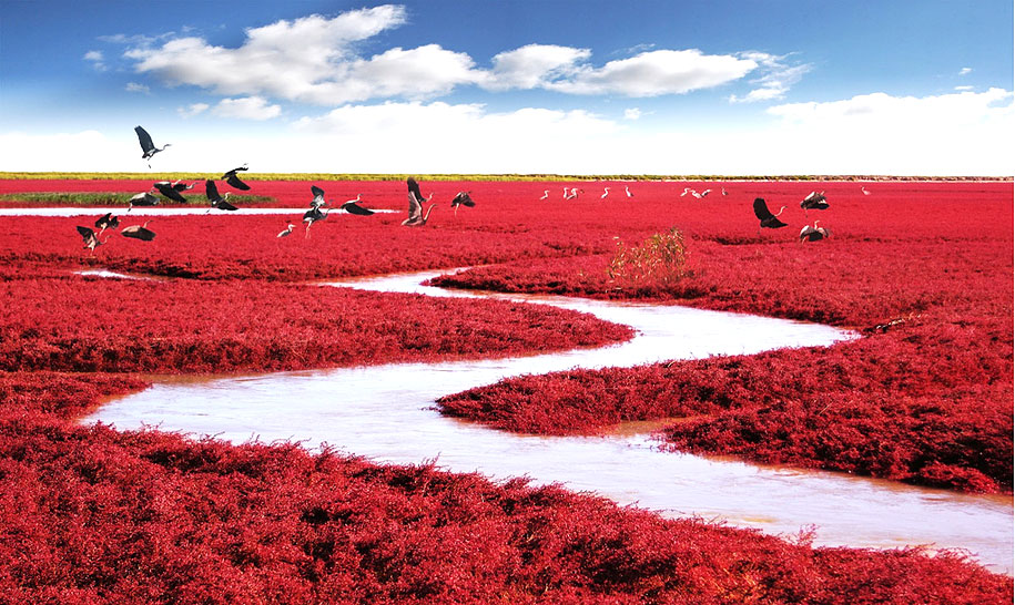 Red Beach China