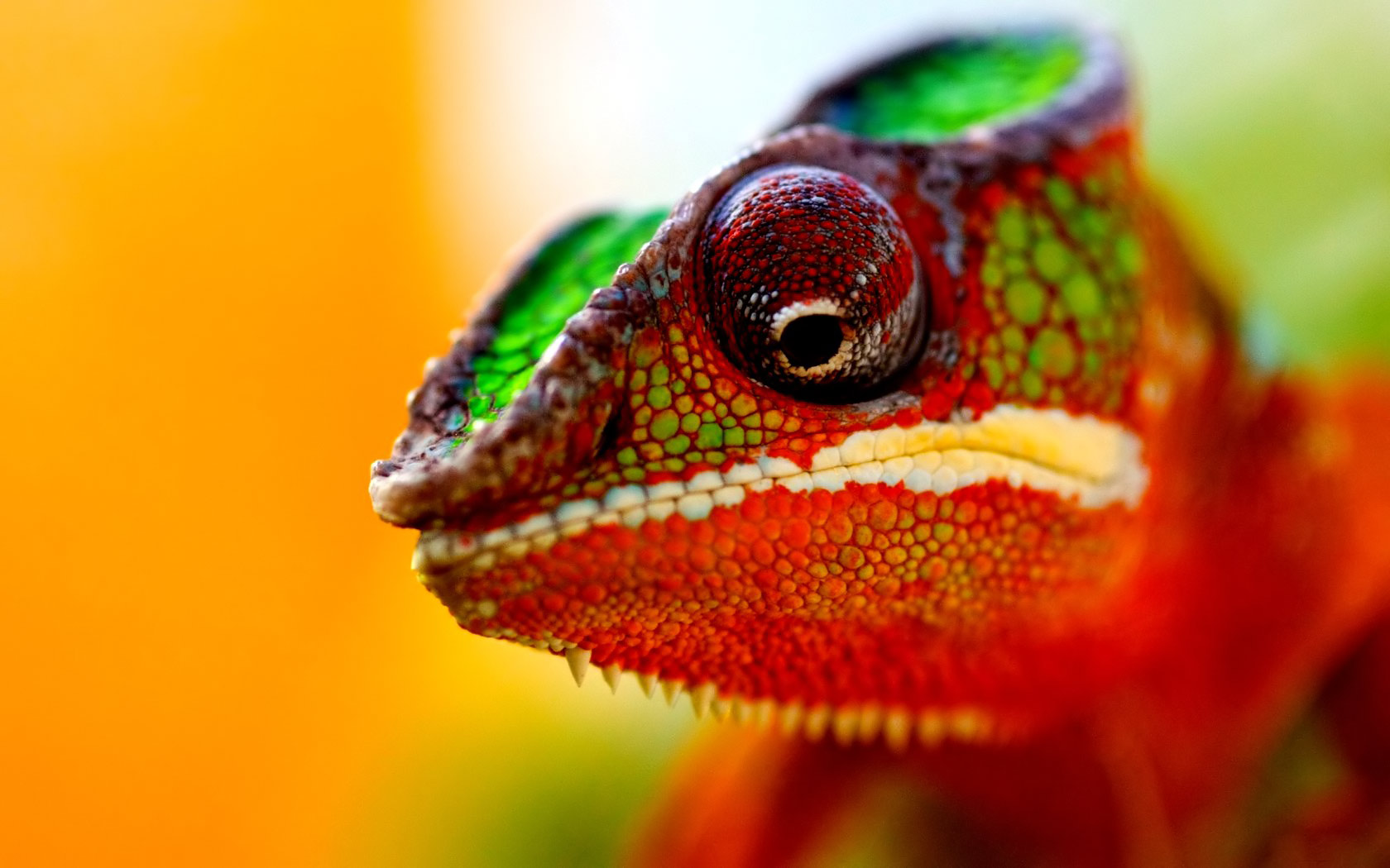 original-dream-I-want-to-have-a-chameleon-or-a-lively-lizard-time-2012-07-08_13-24-34-userid-186