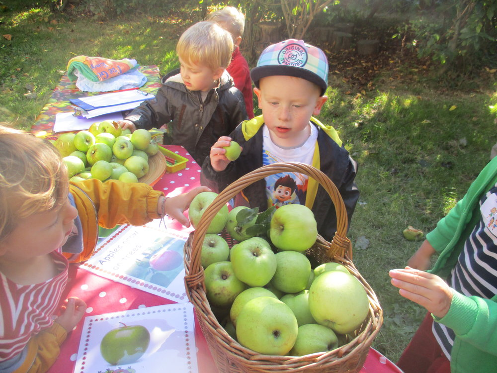 Apple Day 5.JPG