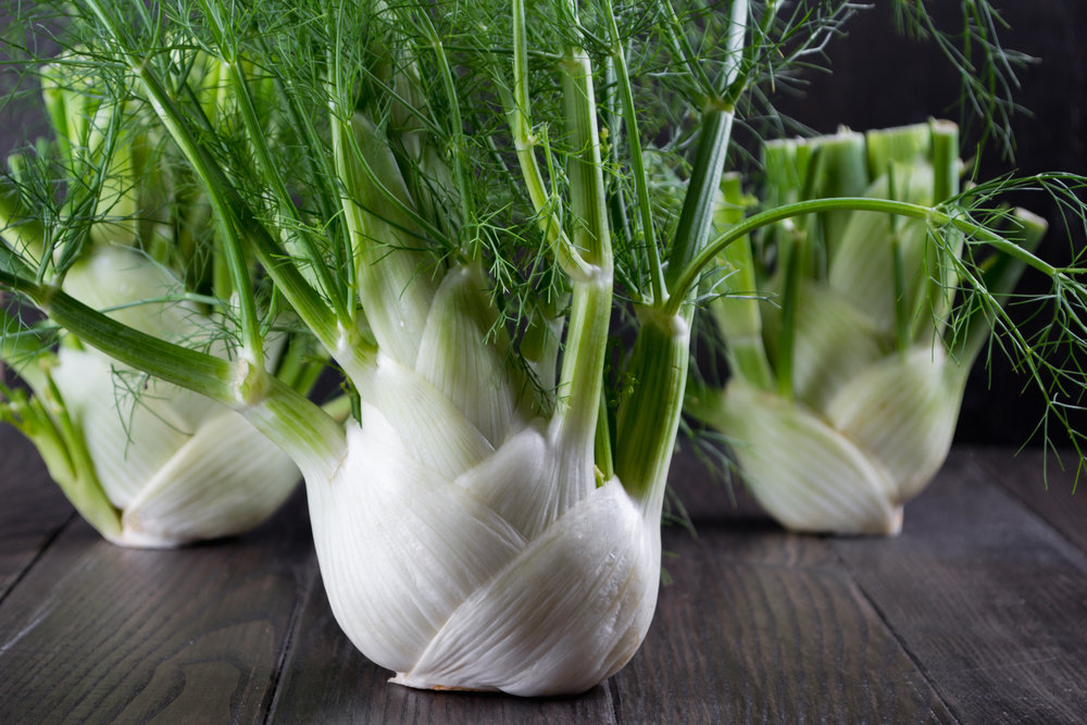 Lots of love for fennel - What we are doing with fennel at New Life Farm…
