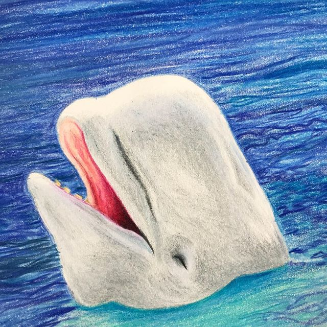 It's not lettering, but I'm really enjoying getting back to my colored pencils!  #prismacolor #coloredpencil #beluga #whale #ocean #sealife #belugawhale #art #fineart #animals #cuteanimals