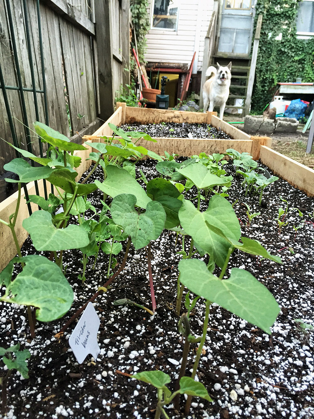 Update: Vegetables are coming along. (Photo by Christie Chisholm)