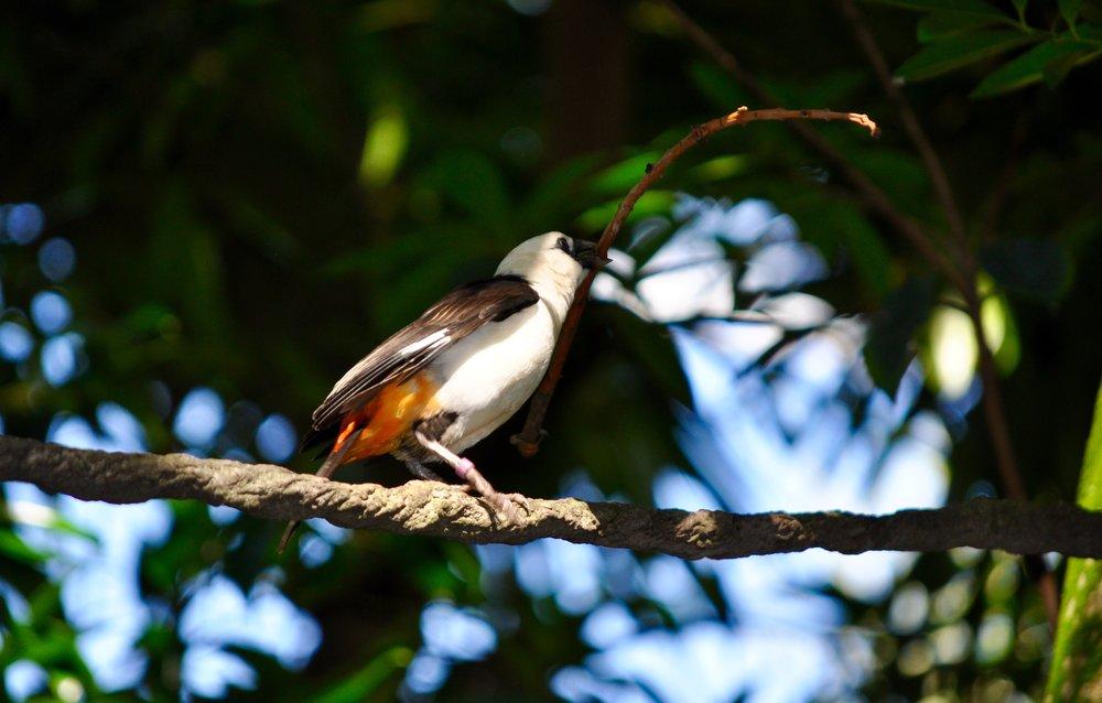 Africa Aviary 1.jpg