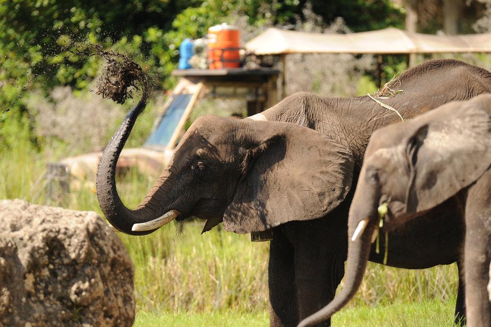 Elephant Mud.JPG