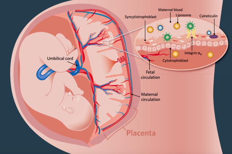 Placenta Peptides — ValerieStyle Design