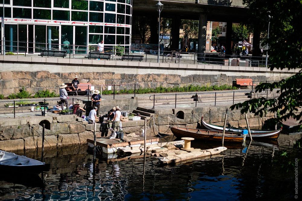 Flåta under utplantning, sett fra Vaterlandsparken. Foto: Sebastian Dahl