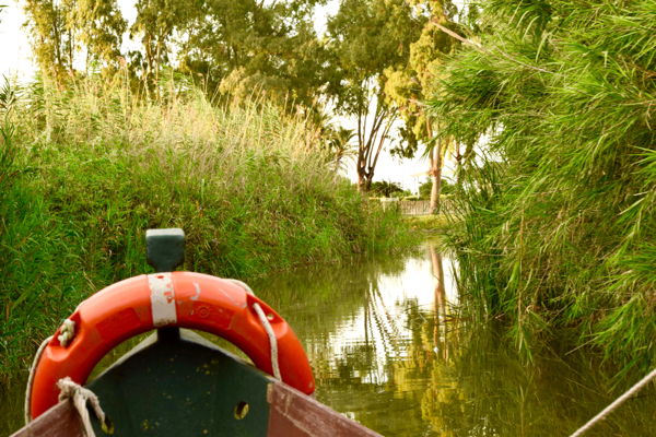 Take a guided boat ride on a traditional fishing boat through the canals of Albufera.