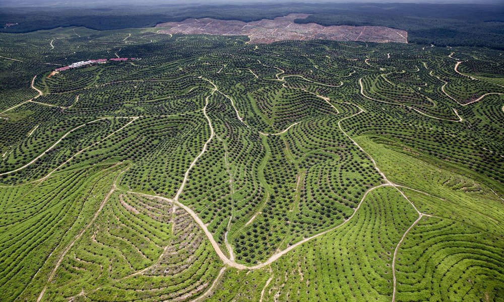 Palm Oil plantation, Indonesia