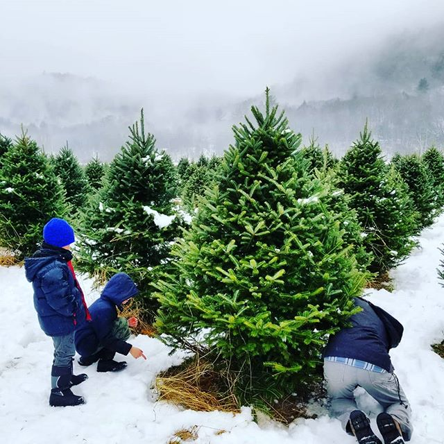 We are open today until 4pm! 🌲Pick out your perfect tree, warm up with free hot chocolate and treats in our Christmas Cottage. (We have fireplaces and heated restrooms!) 🎅 Visit with Santa and make your Holiday memories with us today!! It may be a little rainy out, but it's cozy Christmas here at @christmastreesofvermont! 🌲🎅❄