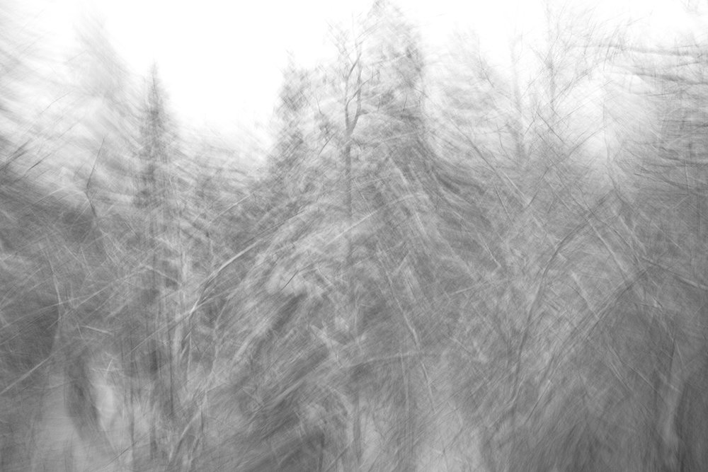 "Woods of America #10. From the Series ""Woods of America"".                              Digital Pigment print on Baryta Paper, 2016"