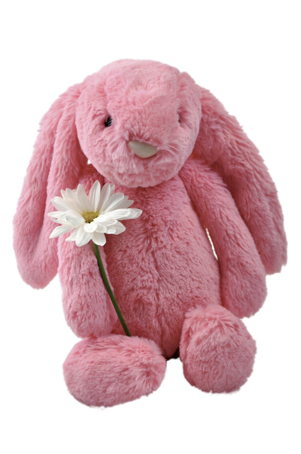 DSC_bunny_cut.jpg