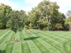 New-England-Landscape-and-Design-Lawn-Care-300x225.jpg