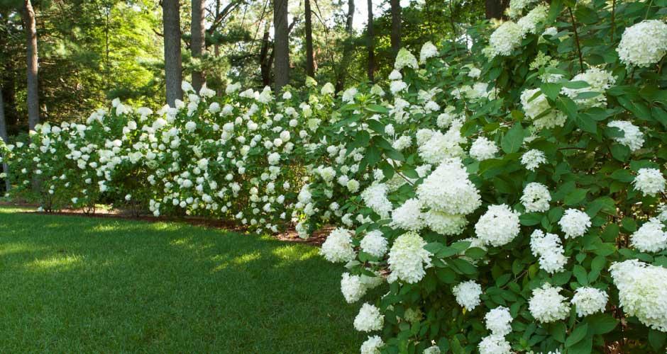 whiteflowerswithlawn.jpg