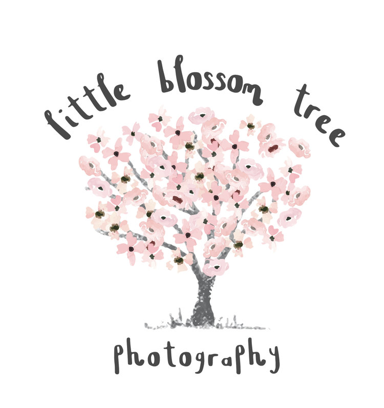 Little Blossom Tree Photography