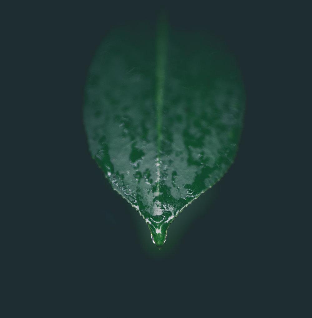 RainyDay14 (1 of 1) copy.jpg