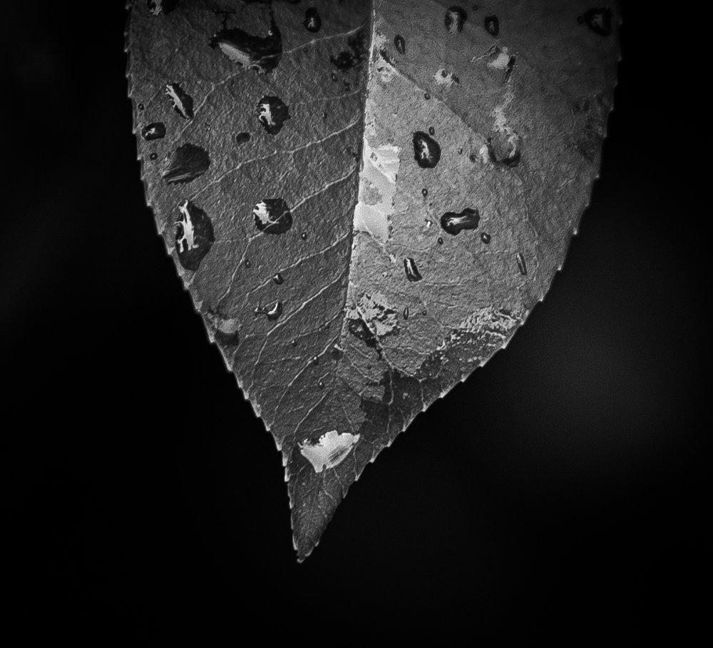 RainyDay6 (1 of 1) copy.jpg