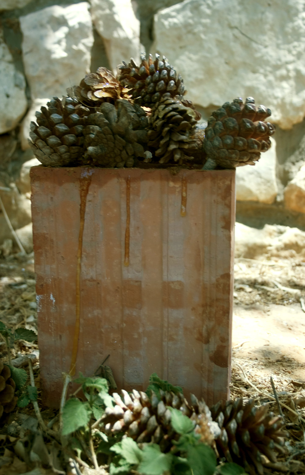 8-a.-Brickhoney-pine-cone.jpg