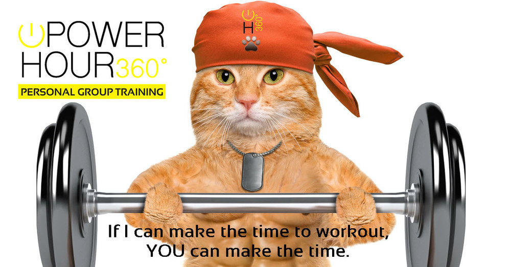 cat workout 1200 by 628.jpg